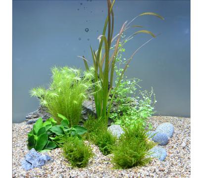 Planet Plants Aquarium-Pflanzen 20er Set 7 Bund & 2 Topf