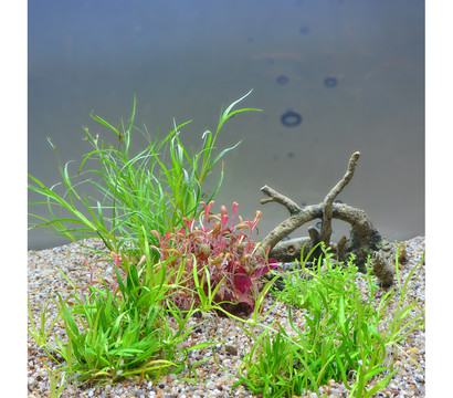 Planet Plants Aquarium-Pflanzen 20er Set Invitro & Topf