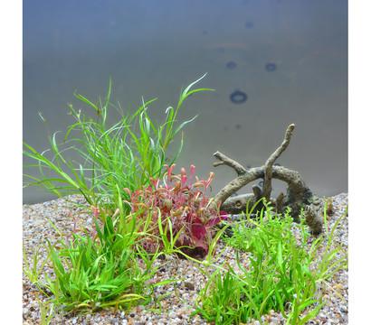 Planet Plants Aquarium-Pflanzen 20er Set Invitro & Topf