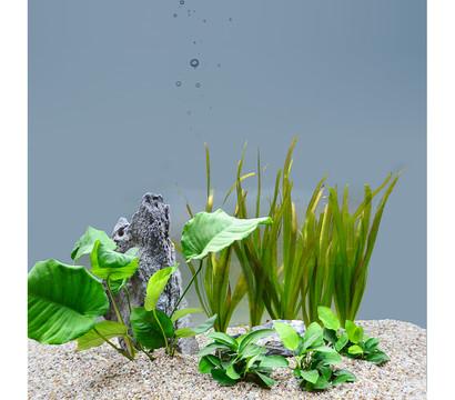 Planet Plants Aquarium-Pflanzen 60er Set Bund & Topf