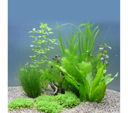 Planet Plants Aquarium-Pflanzen 60er Set Topf & Bund