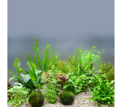 Planet Plants Aquarium-Pflanzen 80er Set Bund, Topf & Holz