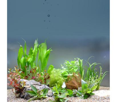Planet Plants Aquarium-Pflanzen 80er Set Bund