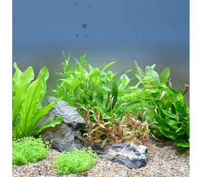 Planet Plants Aquarium-Pflanzen Asien 120er Set
