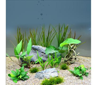 Planet Plants Chichlide 120er Set, Aquarium Pflanzen