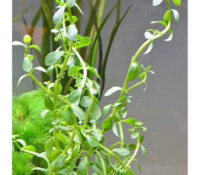 planet plants s damerika 120er set aquarium pflanzen. Black Bedroom Furniture Sets. Home Design Ideas