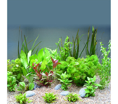 planet plants s damerika 120er set aquarium pflanzen dehner garten center. Black Bedroom Furniture Sets. Home Design Ideas