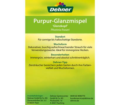Purpur-Glanzmispel, Photinia \'Glanzkopf\' : Dehner Garten Center