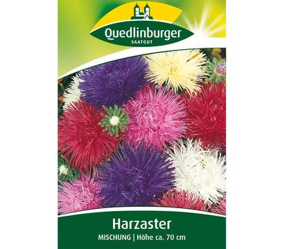 Quedlinburger Samen Harzaster 'Mischung'