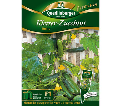 quedlinburger samen kletter zucchini 39 quine 39 dehner garten center. Black Bedroom Furniture Sets. Home Design Ideas
