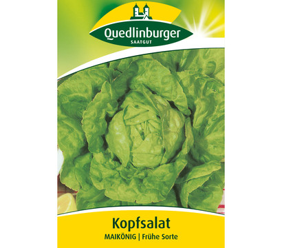 Quedlinburger Samen Kopfsalat 'Maikönig'