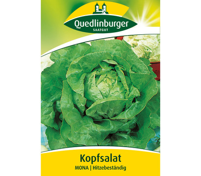 Quedlinburger Samen Kopfsalat 'Mona'