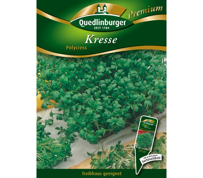 Quedlinburger Samen Kresse 'Polycress'