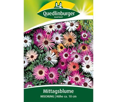 Quedlinburger Samen Mittagsblume 'Mischung'