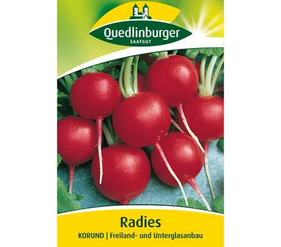Quedlinburger Samen Radies 'Korund'