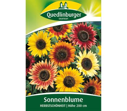 quedlinburger samen sonnenblume 39 herbstsch nheit 39 dehner. Black Bedroom Furniture Sets. Home Design Ideas