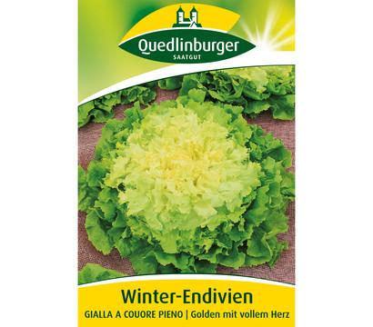 Quedlinburger Samen Winter-Endivien 'Gialla A Couore Pieno'