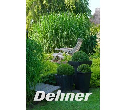 riesen chinaschilf elefantengras dehner garten center. Black Bedroom Furniture Sets. Home Design Ideas