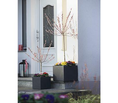 rotk tzchen k tzchen weide st mmchen dehner garten center. Black Bedroom Furniture Sets. Home Design Ideas
