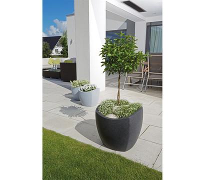 scheurich kunststoff topf wave globe cubo 40 x 40 x 36 cm dehner garten center. Black Bedroom Furniture Sets. Home Design Ideas