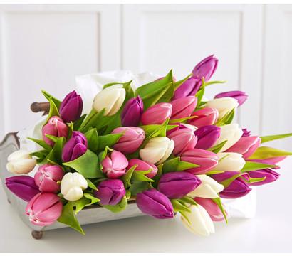 Schnitt-Tulpen, 20 Stück im Bund