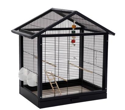 skyline vogelk fig antonia dehner garten center. Black Bedroom Furniture Sets. Home Design Ideas