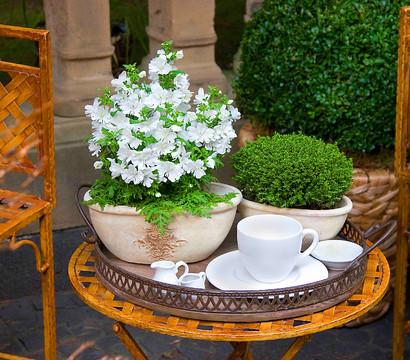 balkonpflanzen mit topf pflanzen stil och charm av en kvinna. Black Bedroom Furniture Sets. Home Design Ideas
