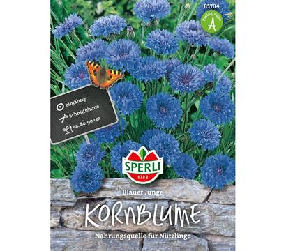 SPERLI Samen Kornblume 'Blauer Junge'