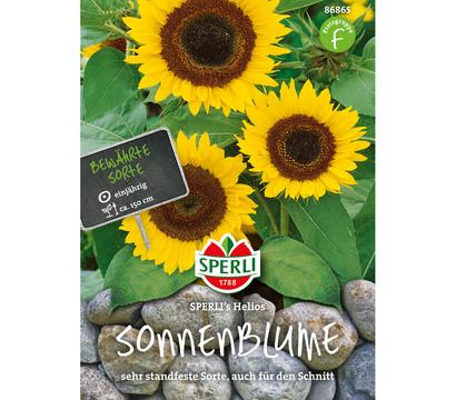 SPERLI Samen Sonnenblume 'Helios'