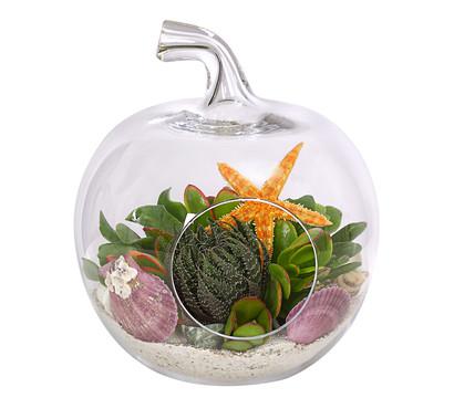 Sukkulenten, im Glasgefäß