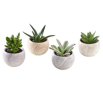 Sukkulenten in Keramik, verschiedene Sorten