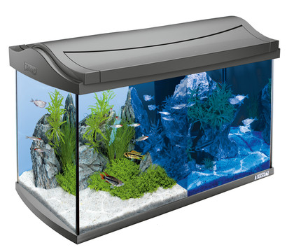 tetra aquaart led aquarium set 60 liter dehner garten center. Black Bedroom Furniture Sets. Home Design Ideas