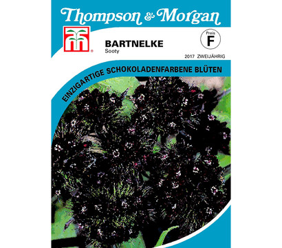Thompson & Morgan Samen Bartnelke 'Sooty'
