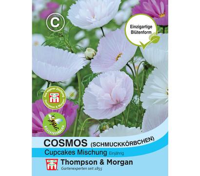 Thompson & Morgan Samen Cosmos 'Cupcakes Mischung