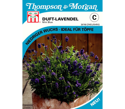 Thompson & Morgan Samen Duft-Lavendel 'Mini-Blue'