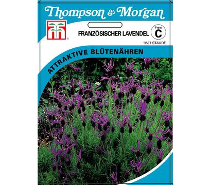Thompson & Morgan Samen Französischer Lavendel