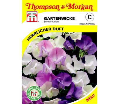 Thompson & Morgan Samen Gartenwicke 'Scent Infusion'