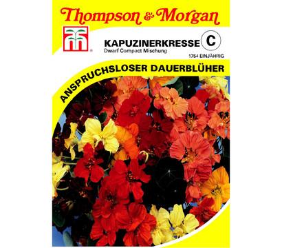 Thompson & Morgan Samen Kapuzinerkresse 'Dwarf Compact Mischung'