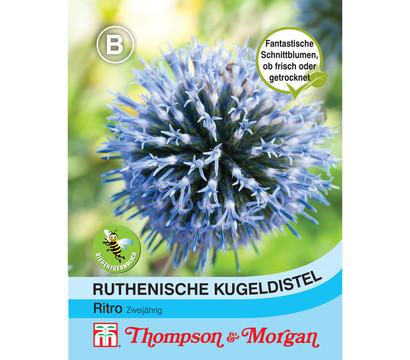 Thompson & Morgan Samen Ruthenische Kugeldistel 'Ritro'