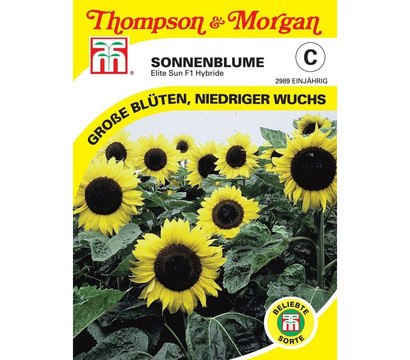 Thompson & Morgan Samen Sonnenblume 'Elite Sun'