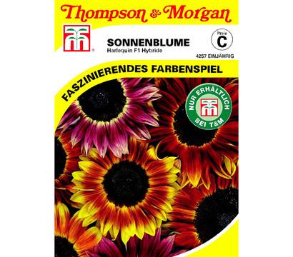 Thompson & Morgan Samen Sonnenblume 'Harlequin'
