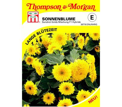 Thompson & Morgan Samen Sonnenblumen 'Sunshot Golds Mischung'