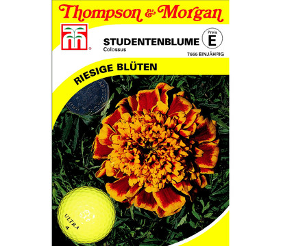 Thompson & Morgan Samen Studentenblume 'Colossus'