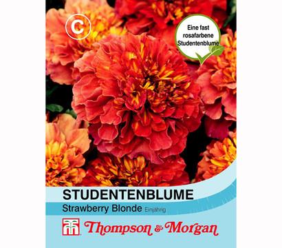 Thompson & Morgan Samen Studentenblume 'Strawberry Blonde'
