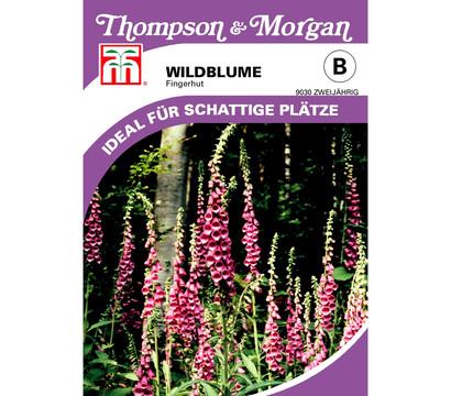 Thompson & Morgan Samen Wildblume 'Fingerhut'