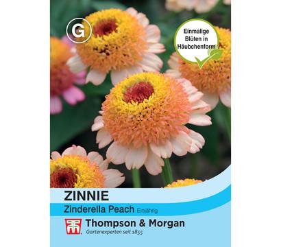 Thompson & Morgan Samen Zinnie 'Zinderella Peach'