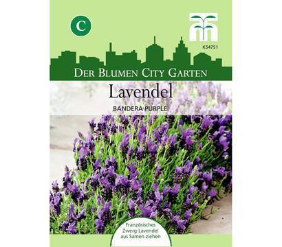 thompson morgan saatgut lavendel 39 bandera purple. Black Bedroom Furniture Sets. Home Design Ideas