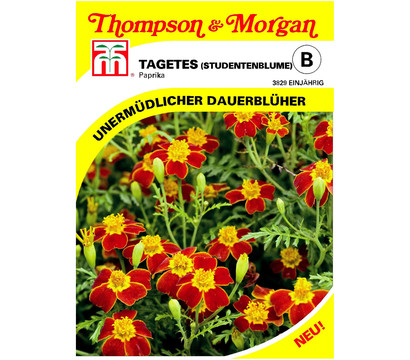 thompson morgan samen tagetes 39 paprika 39 dehner garten center. Black Bedroom Furniture Sets. Home Design Ideas