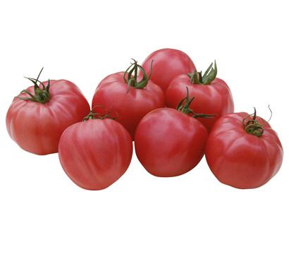tomate 39 pink wonder 39 veredelt dehner garten center. Black Bedroom Furniture Sets. Home Design Ideas