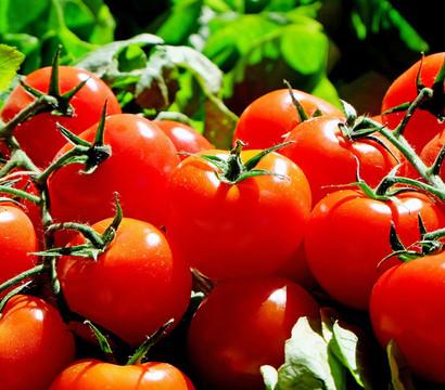 Tomate Previa Dehner